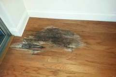 Engineered wood severe Water Damage