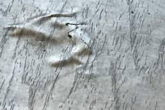 Laminate Flooring Moisture Damage